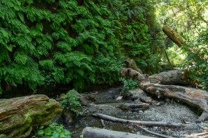 fern_canyon